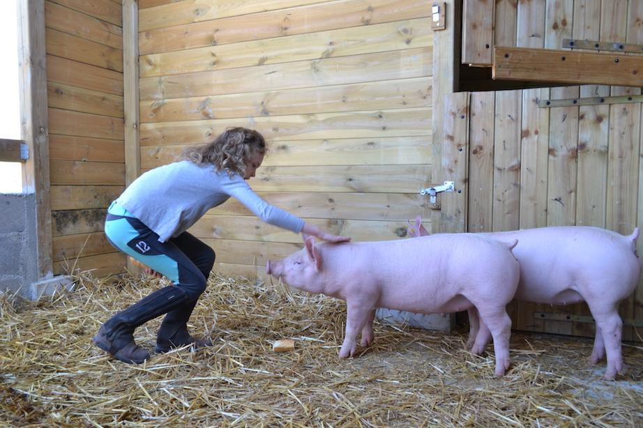 => Colonie de vacances, équitation et animaux de la ferme, ferme pédagogique